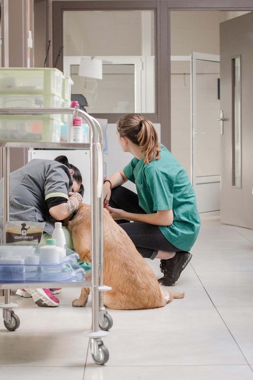 Notre structure vétérinaire
